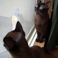 外を見るネコたち